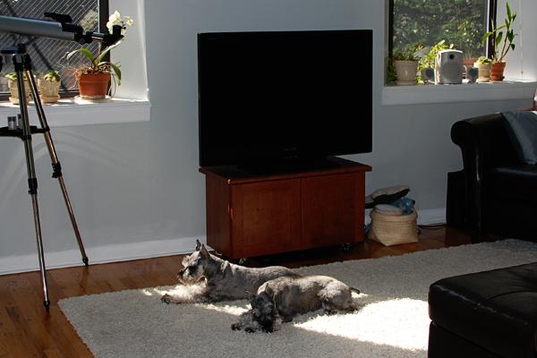 Dogs_sunbathing